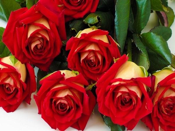 Mơ thấy hoa hồng có điềm báo gì? đánh số nào?