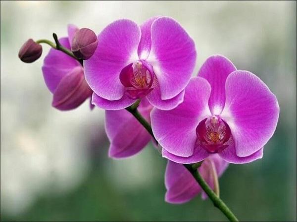 Mơ thấy hoa lan có điềm báo gì? đánh con số nào?